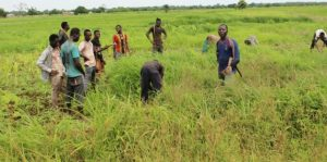Paul Ayormahy sus colegas agricultores en su maizal en Donkorkrom, en el distrito de Kwahu Afram Plains, en Ghana Oriental. Crédito: Jamila Akweley Okertchiri/IPS