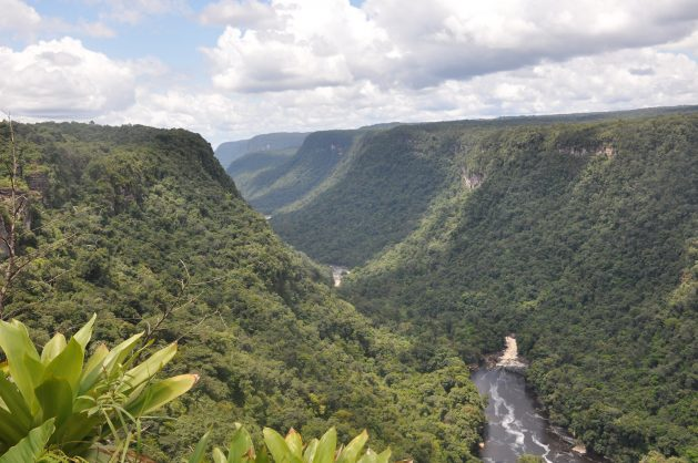 Alrededor de 80 por ciento de los bosques de Guyana, unas 15 millones de hectáreas, permanecen vírgenes. Este país prepara la transición hacia una economía verde, a la vez que explora sus reservas de combustibles fósiles. Crédito: Desmond Brown/IPS.