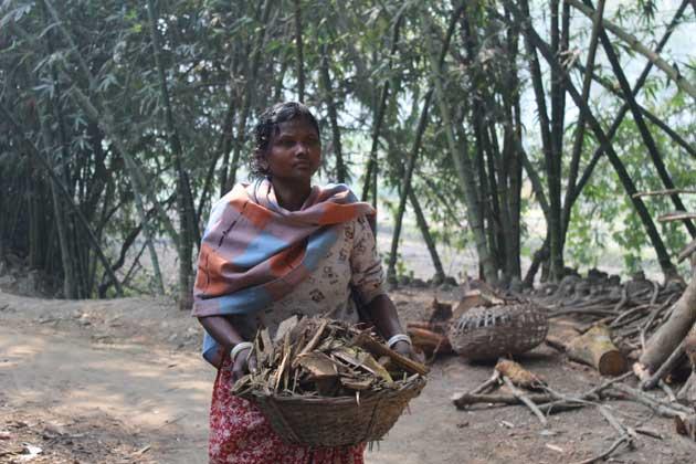 Sharmila Munda, indígena de la comunidad de Shantal en Chatra, Bangladesh, recoge leña para ganarse la vida. Crédito: Rafiqul Islam Sarker/IPS.
