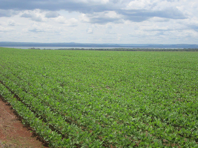 Una plantación de soja en el estado de Tocantins, una nueva frontera del cultivo en Brasil, en la orilla del río Tocantins, que puede ser contaminado por el uso de glifosato y otros agroquímicos. Brasil es ya el principal exportador de la oleaginosa y se disputa con Estados Unidos el de mayor productor mundial. Crédito: Mario Osava/IPS