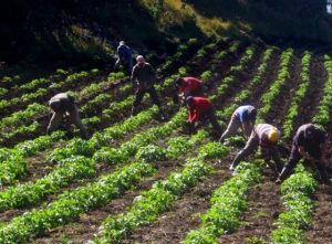 Los olvidados derechos de los campesinos y campesinas, que son más de 1.000 personas en el mundo, podrían ser reconocidos por la comunidad mundial si prospera el proyecto de la Declaración para los Derechos de los Campesinos y Otras Personas Trabajando en las Zonas Rurales. Crédito: Gobierno Colombia
