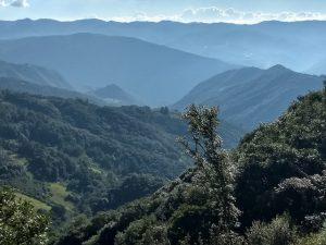 El bosque de la Sierra Juárez, en el estado de Oaxaca, en el sur de México, es vulnerable a las consecuencias del cambio climático, pero al mismo tiempo puede contribuir a su combate. Crédito: Emilio Godoy/IPS