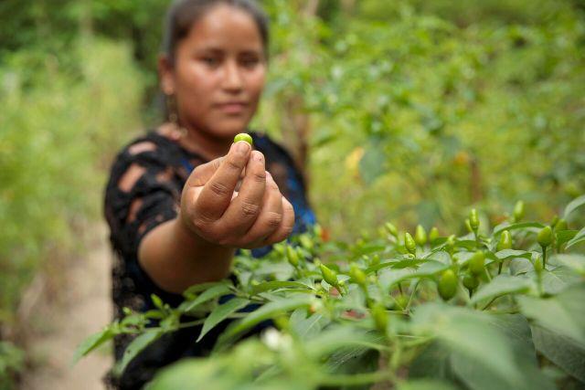 Elena Sam Pec, joven rural de Puente Viejo, en el departamento de Jalapa, Guatemala. Crédito: Ryan Brown/ONU Mujeres