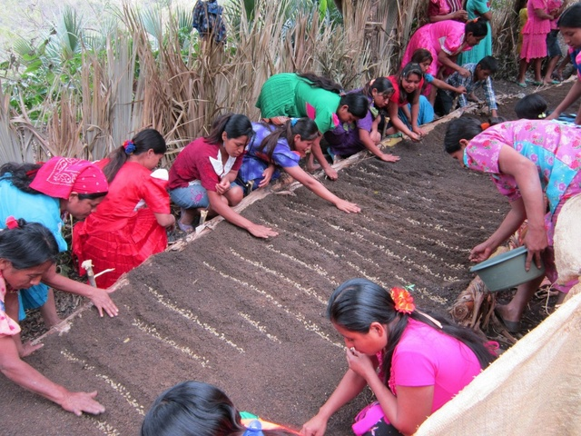 Mujeres trabajando en la producción de granos básicos. Departamento de Chiquimula, Guatemala. Crédito: SECAC