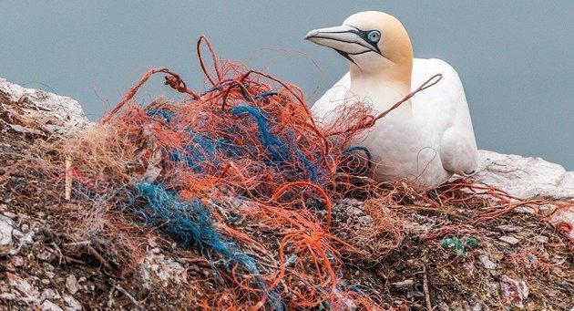 Limpiar los océanos de los plásticos es una necesidad cada vez más perentoria. Crédito: CCO/Pixabay