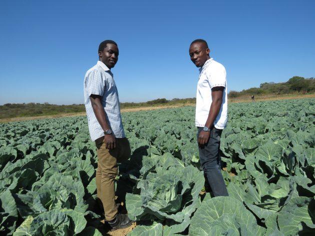 Jóvenes agricultores y hermanos Prosper y Prince Chikwara utilizan técnicas de presión en su huerta, fuera de la ciudad de Bulawayo, Zimbabwe. Crédito: Busani Bafana/ IPS.