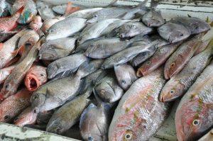 El sector pesquero en la Comunidad del Caribe es una importante fuente de ingresos. Cuatro países de la región realizaron un inventario de las principales fuentes de contaminación con mercurio en sus territorios. Crédito: Desmond Brown/IPS.