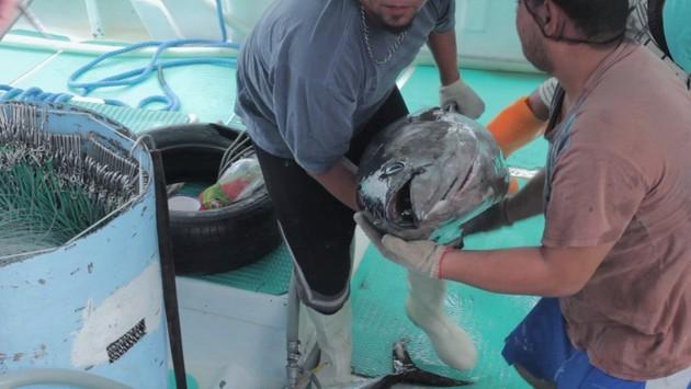 Dos pescadores costarricenses muestran un pez que acaban de atrapar. Crédito: PNUD Costa Rica
