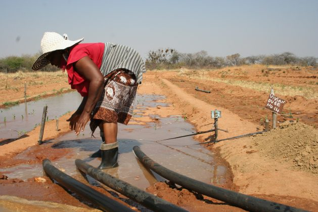 Una campesina riega su terreno en el marco del Programa de Irrigación de Tjankwa, en el distrito de Plumtree, 100 kilómetros al oeste de Bulawayo, Zimbabwe. Crédito: Busani Bafana/IPS.
