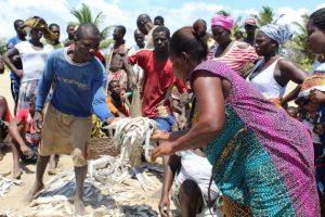 Llegó la pesca del día. Desde que la comunidad del pueblo de Sanwoma, en Ghana, comenzó a recuperar los manglares, la laguna registró un aumento de la reserva de peces. Crédito: Albert Oppong-Ansah/IPS.