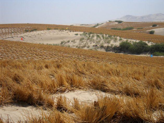 Por culpa de la degradación de suelos, el planeta pierde 12 millones de hectáreas anuales de tierra fértil. Esta fotografía de 2013 registra los esfuerzos por reverdecer partes del desierto de Kubuqi, el séptimo más grande de China. Crédito: Manipadma Jena/IPS
