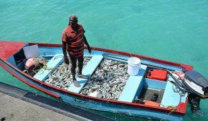 En la fotografía, un pescador de Barbados. Las reservas de peces en el Caribe sufren las consecuencias del cambio climático. Crédito: Desmond Brown/IPS
