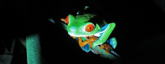 El 40% de las especies de anfibios está en peligro de extinción. Crédito: Jing Zhang/ONU