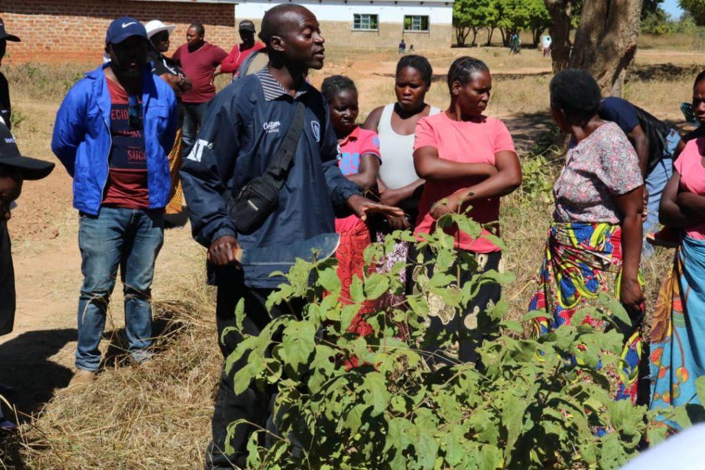 Lucky Choolwe, un facilitador de una organización ambiental de Zambia, que conecta a los propietarios de las tierras y los responsables de las políticas destinadas a luchar contra la deforestación, durante una sesión práctica con agricultores que participan en un proyecto especial de regeneración de bosques administrados por agricultores. Crédito: Cortesía de Friday Phiri
