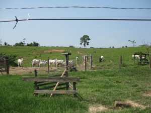 Una finca típica de los asentamientos rurales de los años 70 y 80 en Acre, un estado amazónico del oeste de Brasil, en la frontera con Bolivia y Perú. Los bosques amazónicos dieron lugar a pastizales con un muy bajo promedio de tres reses por hectárea. La deforestación no ofreció prosperidad, sino pobreza y desaliento. Crédito: Mario Osava/IPS