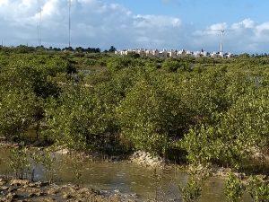 Los manglares enfrentan amenazas como la urbanización, la construcción de infraestructura no sostenible, la expansión turística y la tala y pesca ilegales. En la imagen, el manglar de la Ciénega de Progreso, con un barrio vecino al fondo, en el municipio de Progreso, en el estado de Yucatán, en el sureste de México. Crédito: Emilio Godoy/IPS