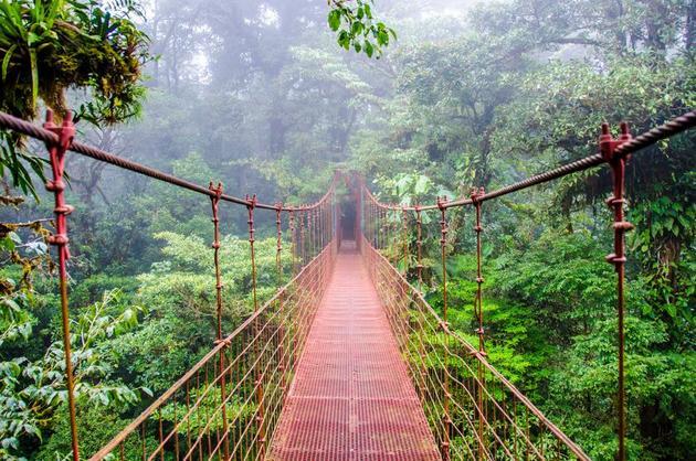Bosque Nuboso, Costa Rica. Crédito: Presidencia de Costa Rica