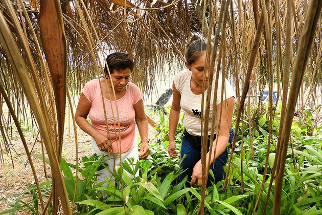 En el norte de la Amazonía boliviana, un emprendimiento sostenible involucra a la comunidad local en el procesamiento de frutas silvestres de la selva amazónica y, al mismo tiempo, protege los bosques contra la tala de árboles y la contaminación. Crédito: Teófila Guarachi/ONU Mujeres
