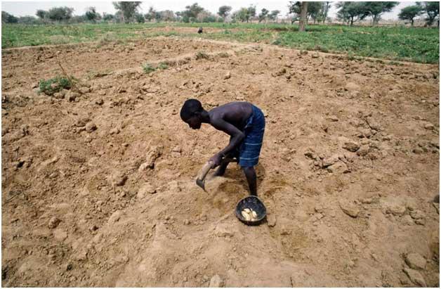 Las alteraciones climáticas convierten la agricultura en una actividad cada vez más insegura. Crédito: ONU