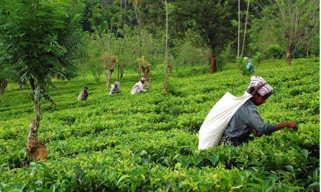 Campesinos atienden un cultivo en India. Crédito: Cortesía de Food Tank
