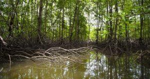 La protección y restauración de los ecosistemas marinos sería una de las metas ambiciosas de los países para contrarrestar el cambio climático en el marco de los nuevos compromisos asumidos con la Convención de las Naciones Unidas sobre Cambio Climático
