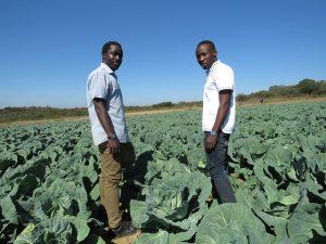 África se esfuerza por atraer jóvenes a la actividad agrícola y generar innovación en el sector para atender los mayores desafíos que suponen el hambre, la malnutrición y la pobreza