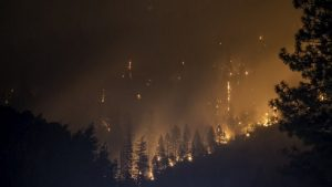 Los Incendios Forestales podrían convertirse en la nueva normalidad a medida que las temperaturas globales continúen aumentando, dice Niklas Hagelberg, experto en cambio climático del Programa de las Naciones Unidas para el Medio Ambiente