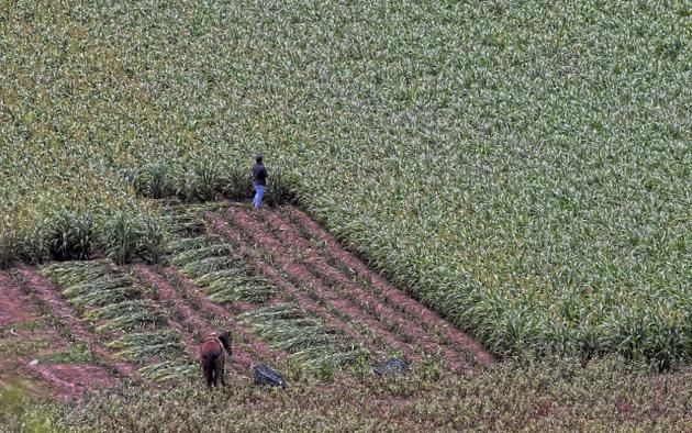 México está entre los países de América Latina y el Caribe que menos financiamiento destinan al sector agrícola, obligando a la población del campo a recurrir a mecanismos informales de ahorro y crédito