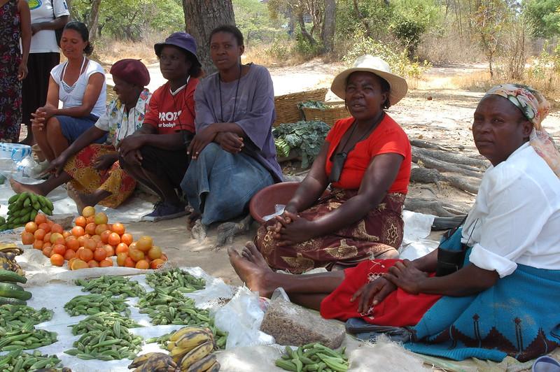 La falta de demanda de productos frescos en Zimbabwe se produce mientras el país enfrenta una crisis alimentaria que ha llevado al pedido internacional para recibir asistencia humanitaria y pone de relieve los desafíos para equilibrar la producción y el consumo de alimentos
