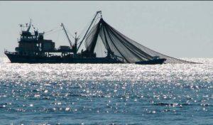 La eliminación o disminución de los subsidios al sector pesquero puede reducir de manera significativa toda clase de contaminación marina que tiene efectos desastrosos en el conjunto de la vida del planeta
