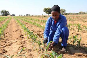 En las poblaciones de países del Sur ya malnutridas, débiles y vulnerables a la enfermedad, podría surgir una crisis dentro de una crisis, en la que la crisis sanitaria se vería agravada por otra alimentaria, dice Dominique Burgeon, director de emergencias en la FAO (Organización de las Naciones Unidas para la Agricultura y la Alimentación)