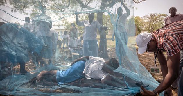 La malaria puede matar hasta 769 000 personas en África subsahariana este año, el doble de las muertes registradas en 2018, si persisten perturbaciones graves para distribuir en la región instrumentos de prevención y tratamiento, advirtió este jueves 23 la Organización Mundial de la Salud (OMS).
