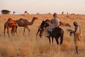 Los afectados por el hambre en la región del Sahel pueden ser 17 millones a mediados de año si no hay respuestas urgentes, señaló este lunes 27 la Organización de las Naciones Unidas para la Agricultura y la Alimentación (FAO).