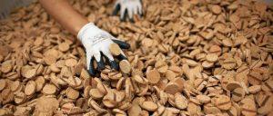 En un marco de creciente interés por la sostenibilidad, Portugal apuesta por regeneración de industria del corcho y su futuro sostenible y desarrolla nuevos e inesperados usos de este material
