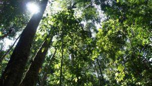 Los bosques tropicales pueden desarrollar mecanismos de resistencia a las variaciones climáticas a largo plazo. Pero esa resiliencia tiene límites: 71 por ciento de esos bosques estarán amenazados si las temperaturas promedio mundiales se estabilizan a 2 grados centígrados por encima de los niveles preindustriales en los próximos 10 años, advierte un nuevo estudio.