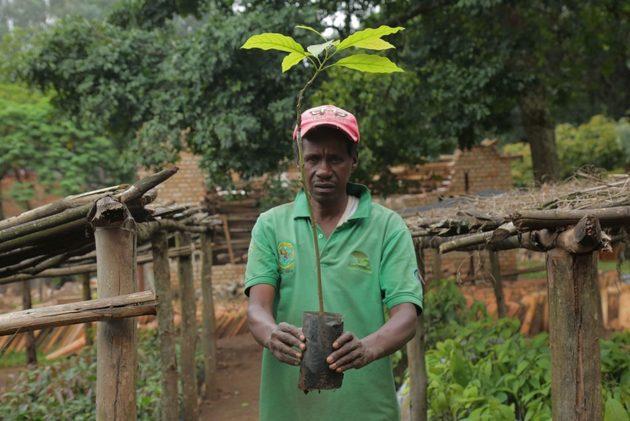 Dentro del objetivo mundial de restaurar 150 millones de hectáreas de bosques degradados para 2020, Ruanda logró reforestar más de 800.000 hectáreas en menos de una década