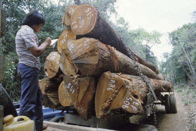 A pesar de que la pérdida de bosques es más lenta, el área forestal en América del Sur sigue disminuyendo: la región perdió 2,6 millones de hectáreas de bosque cada año en el período 2010-2020, la segunda tasa más alta del mundo, sólo superada por la de África, que perdió anualmente 3,9 millones de hectáreas.
