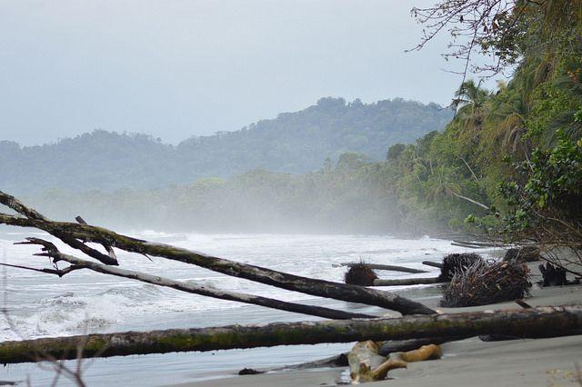 Olas y marejadas se comen las playas del Parque Nacional Cahuita, en Costa Rica, donde la vegetación pierde raíces y termina en el mar, uno de los impactos de la crisis climática que el país centroamericano busca mitigar con políticas como la de la neutralidad del carbono. Foto: Diego Arguedas/IPS