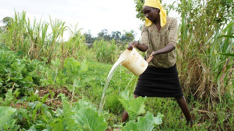 La Ley de propiedad matrimonial de Kenia discrimina a las mujeres y contraria la Constitución del país, en uno de los obstáculos de las mujeres en sus derechos a la tierra. Menos del cinco por ciento de todos los títulos de propiedad de la tierra en Kenia están en manos de mujeres. Foto: Miriam Gathigah / IPS