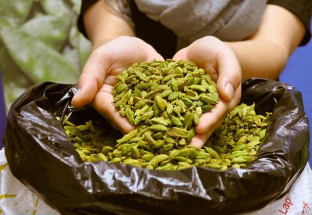 El cardamomo, apetecida especia con gran consumo en Medio Oriente e India, de donde es originaria, es una fuente de ingresos para los indígenas mayas agrupados en cooperativas que la cultivan a miles de kilòmetros, en Guatemala. Foto: MAGA