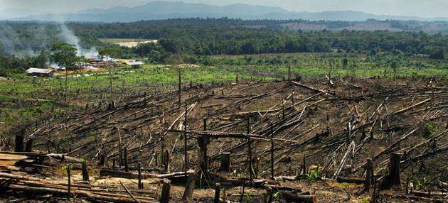 Escena de una quema de bosques en Sumatra, Indonesia, para plantar palmas aceiteras. La destrucción de la corteza forestal del planeta incrementa las emisiones de carbono que una red de países e instituciones no estatales se propone reducir a cero para el año 2050. Foto: Peter Prokosch/PNUMA