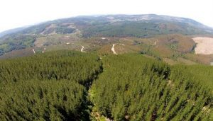 El análisis de una norma forestal que se extendió durante 25 años en Chile concluyó que la ampliación forestal fue en detrimento de las especies nativas. Foto: Cortesía de Cristian Echeverría