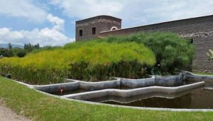 Los humedales construidos son una alternativa de bajo costo para el tratamiento de aguas residuales. Crédito de la imagen: Cortesía de Green Growth Group Mexico SA de CV para SciDev.Net
