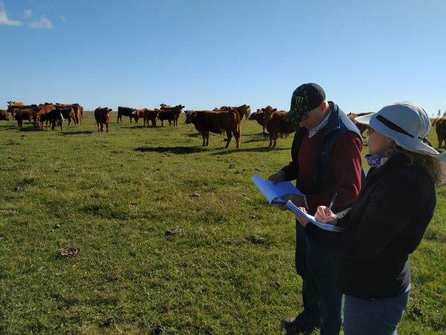 La producción ganadera en Uruguay se mantiene en el marco de la pandemia covid-19, en parte por el trabajo de 200 cooperativas en el sector, según destaca la Organización de las Naciones Unidas para la Alimentación y la Agricultura. Foto: FAO