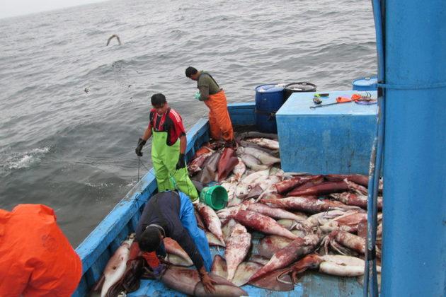 Pescadores artesanales del Perú capturando el calamar gigante, llamado también pota. Foto: Global Fishing Watch