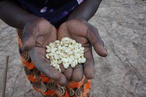 """Los sistemas alimentarios del mundo están en peligro por la crisis climática, que """"interfiere masivamente"""" con su desarrollo inclusivo y sostenible, con sus consecuentes sequías, inundaciones e incendios. Foto: Busani Bafana / IPS"""