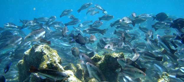 Congregación de animales marinos refleja lo que se pierde cuando los compromisos sobre la biodiversidad se incumplen.