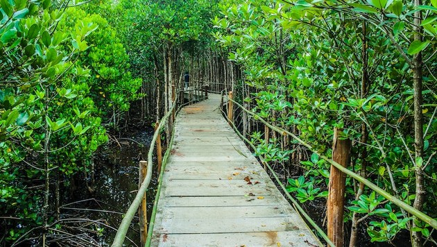 Camino rodeado de árboles simboliza el camino de las ocho transformaciones por la biodiversidad.