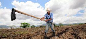 Los campesinos del Corredor Seco de América Central padecen alternativamente sequías prolongadas y fuertes inundaciones que les hacen perder las cosechas de maíz y frijoles que necesitan para subsistir, y una solución es restaurar bosques y otras áreas naturales. Foto: Neil Palmer/CIAT
