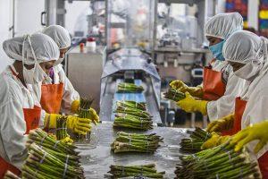 Trabajadoras en Chincha, al sur de Lima, preparan espárragos para su comercialización. Las exportaciones, así como el consumo local, caerán en medio de la peor crisis de América Latina y el Caribe en 100 años. Foto: FAO